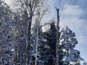 Metsänhoito- ja puunkaatopalvelut - sen Tekee Heke