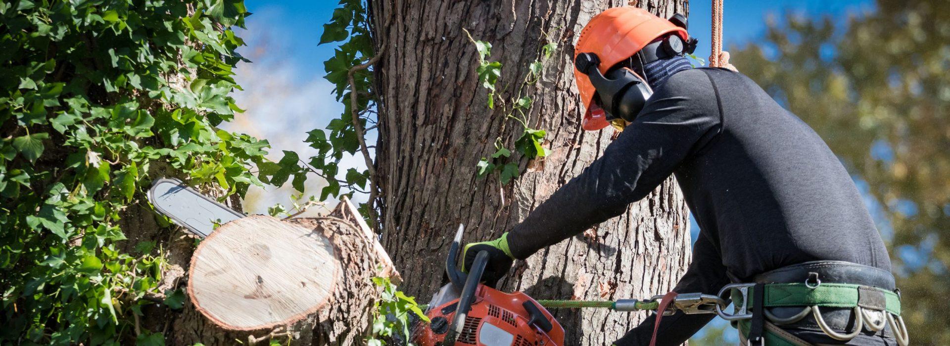 Pihapuunkaatopalvelut Varkauden seudulla | Tekee Heke